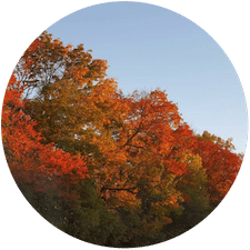 Fall Lawn Services NKY